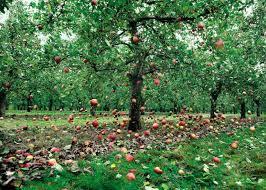 apple-falling2